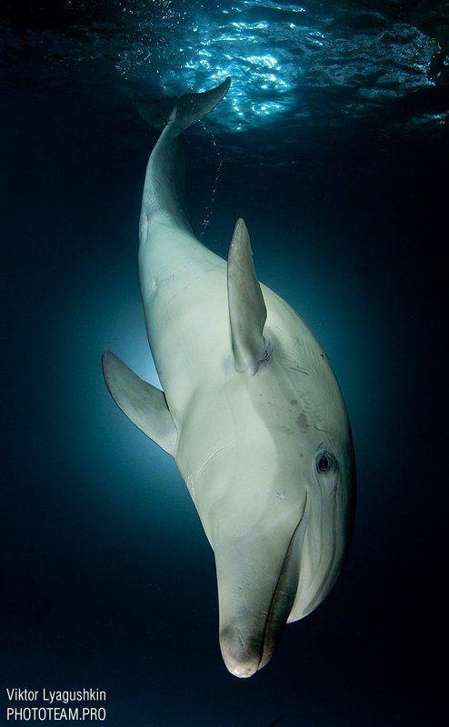 Ныряющий дельфинphoto preview