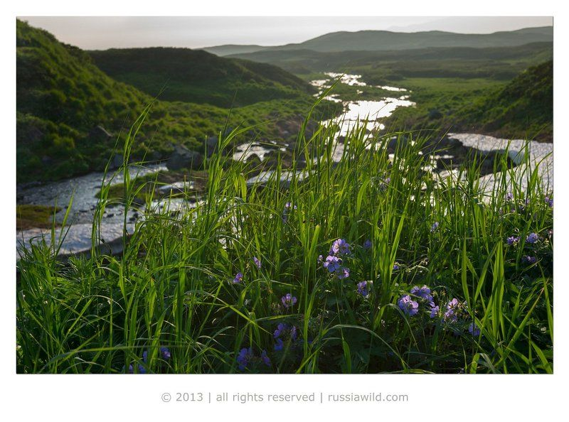 пейзаж, лето, камчатка Лето на Камчаткеphoto preview