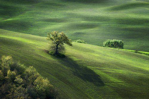 Pastorale in green