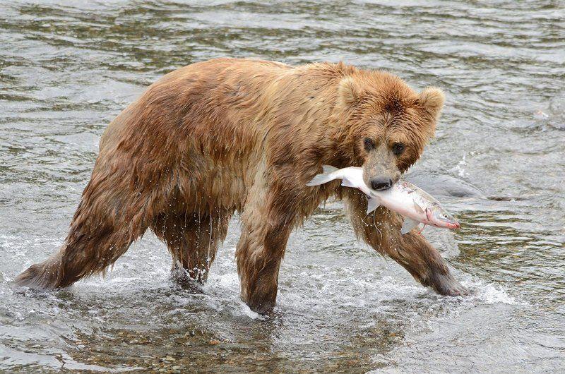 С рыбалкиphoto preview