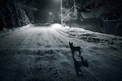 Ночь, улица, фонарь, собака...