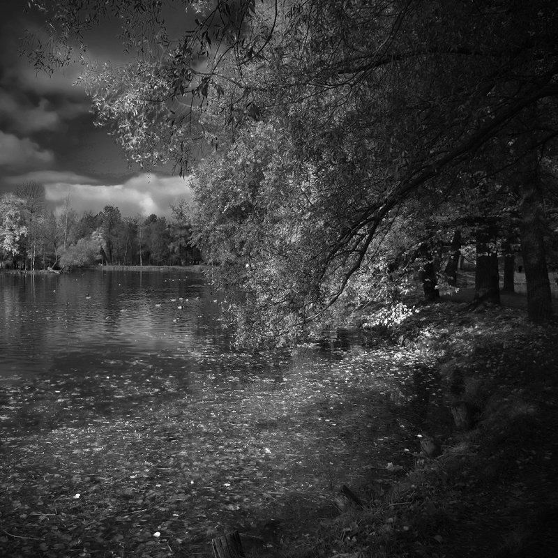 гатчина Черно-белая осеньphoto preview