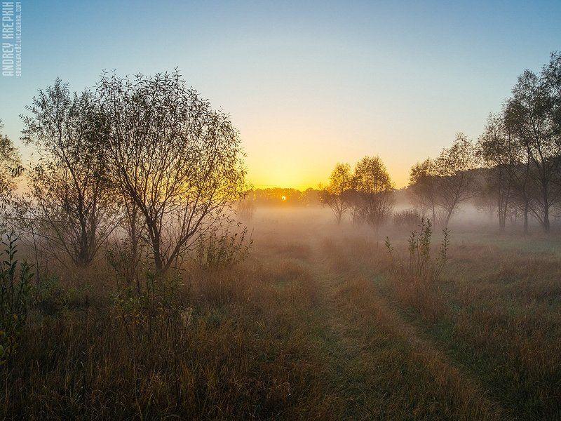Деревья, Природа, Рассвет, Солнце, Туман Рассвет в Бучеphoto preview