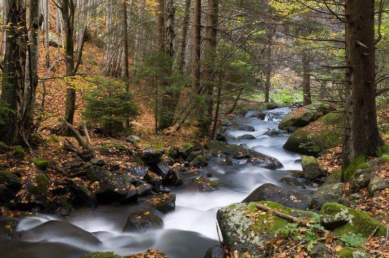 Fish animaltree, Mountian, River, Water Горски пейзаж с рекаphoto preview