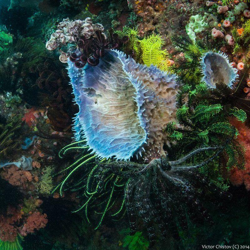 Underwater О плотности жизни на морском днеphoto preview
