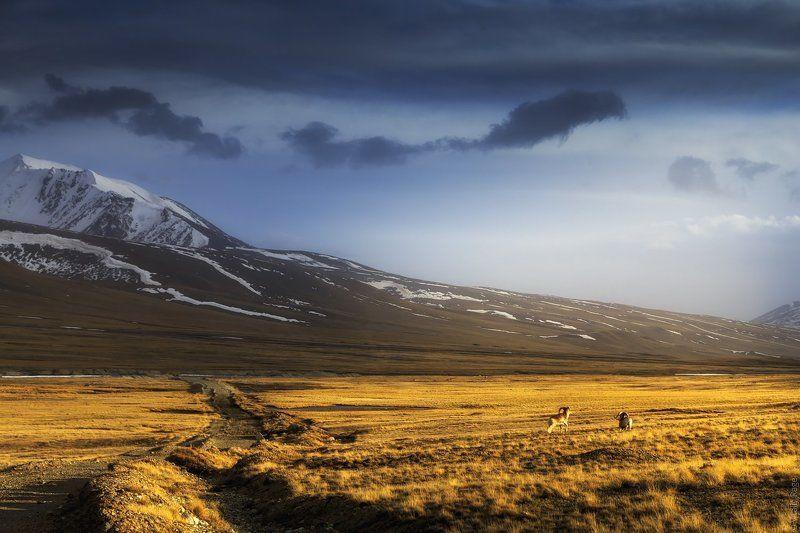 Высокогорная долина Арабель, Киргизияphoto preview