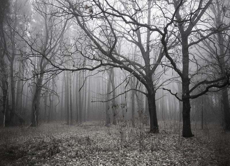 Курская область, Лес, Осень, Туман Серо, сыро и промозгло...photo preview