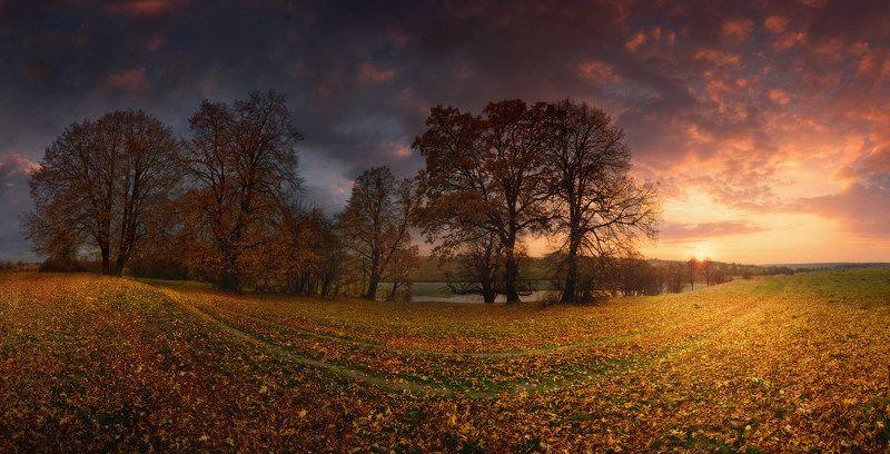 дорога, Листва, осень, утро Осенний смайлphoto preview