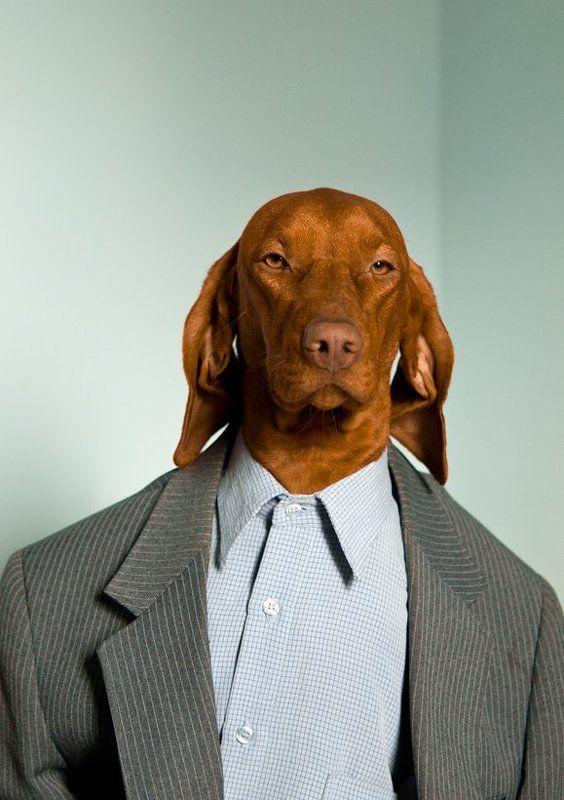 Кучето на Брат ми!photo preview