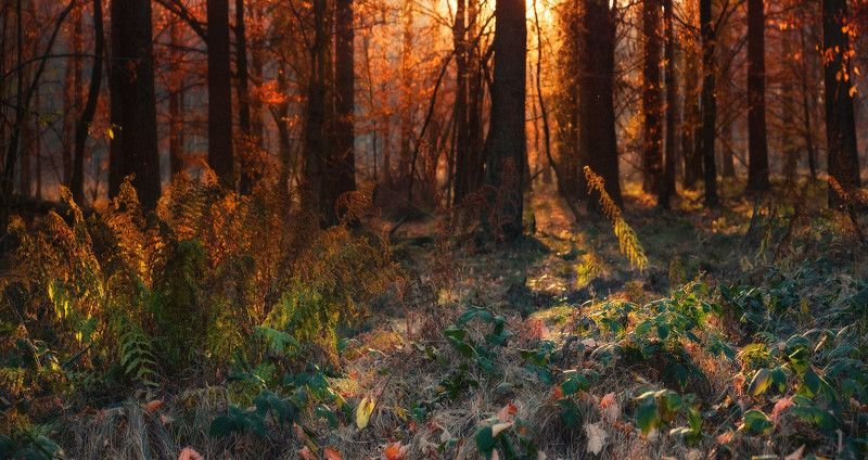 деревья, лес, осень Прогулки в осеннем лесуphoto preview