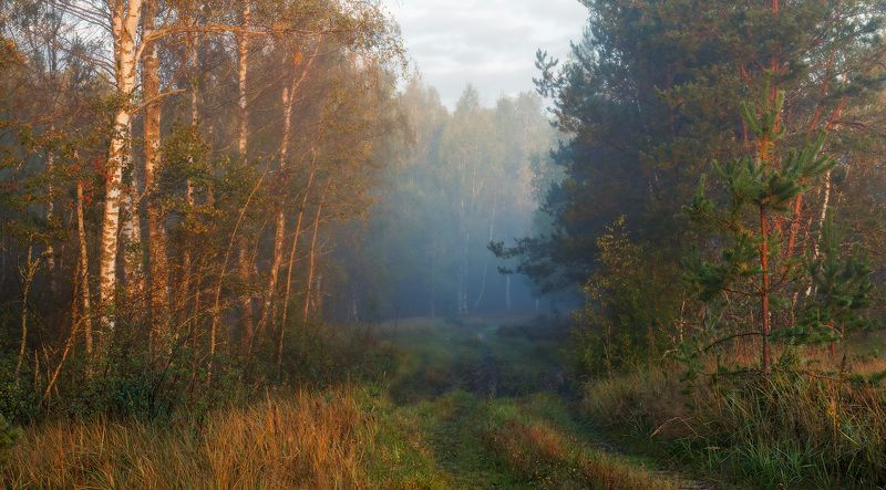 Утреннего леса ароматы.photo preview