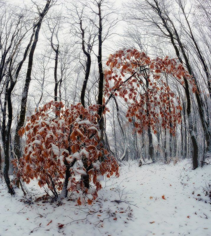 зима, лес, дерево, снег Припозднившеесяphoto preview