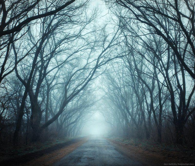 Деревья, Зима, Лес, Пейзаж, Туман, Украина, Утро Туман на Хортицеphoto preview