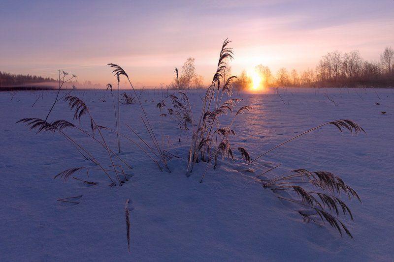 Зима, Иней, Мороз, Рассвет, Солнце, Туман, Утро ~125~photo preview