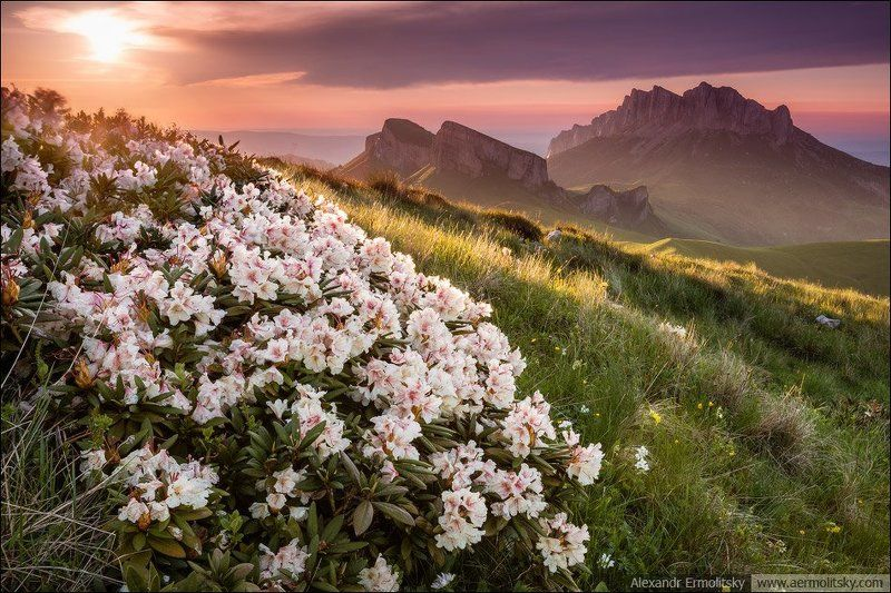 Caucasus, Thachi, Кавказ, Тхачи ~ Стража ~photo preview