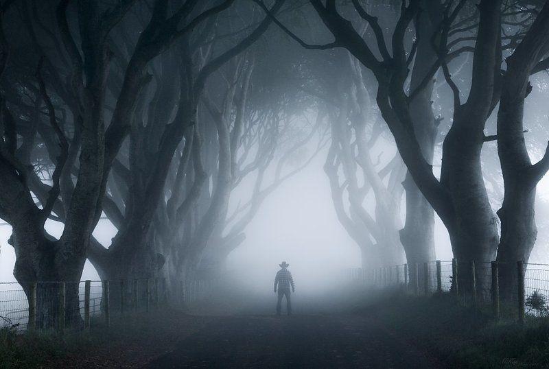 The Dark Hedges, trees, fog, Ireland, Antrim, self-portrait, northern ireland, morning,  The Dark Hedges photo preview