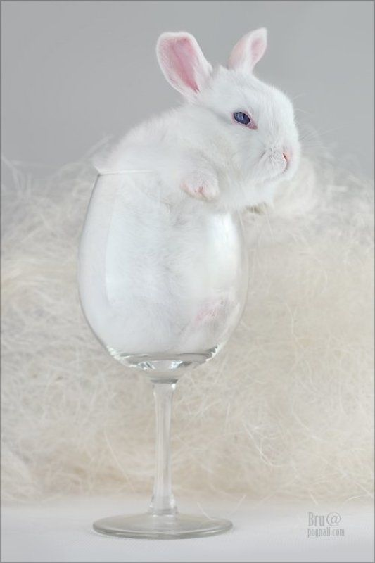 кроликбуковка, нежное чудовище Кролик Буковкаphoto preview