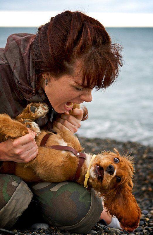 собака, море, портрет Я сказала: «СИДЕЕЕЕТЬ!!!»photo preview