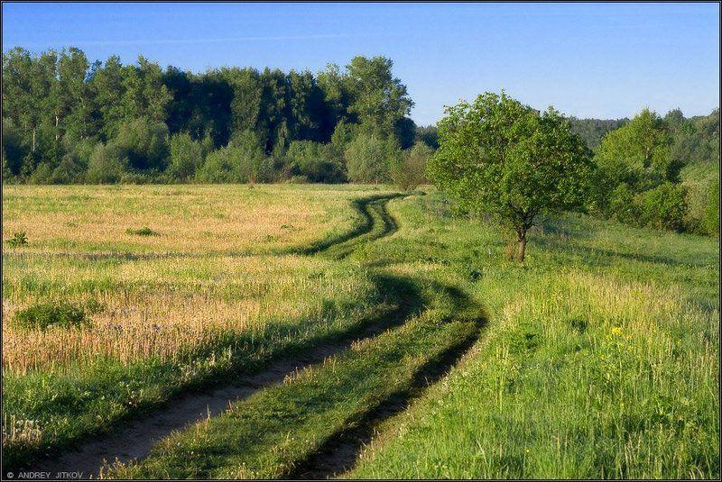 пейзаж По тропе, убегающей вдаль..photo preview