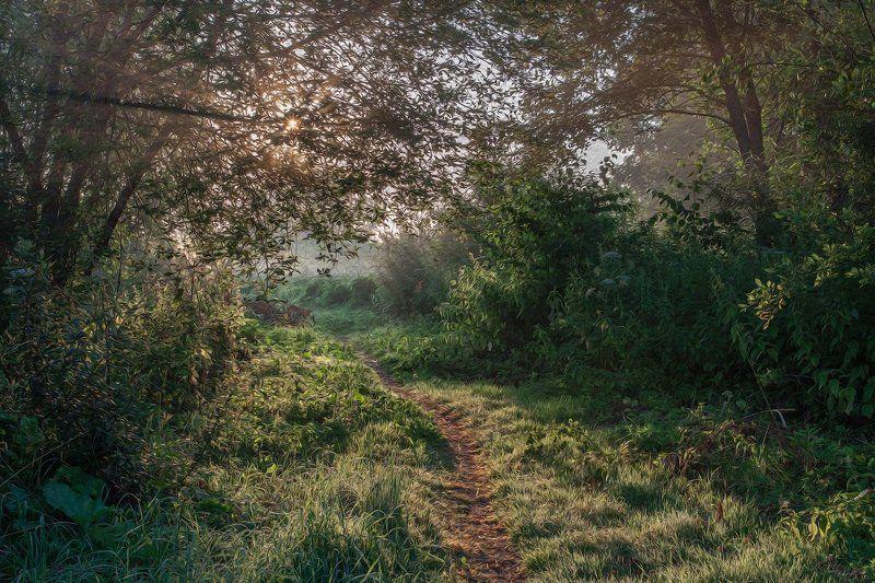 Тригорское. Псковская область. Тёплое утроphoto preview