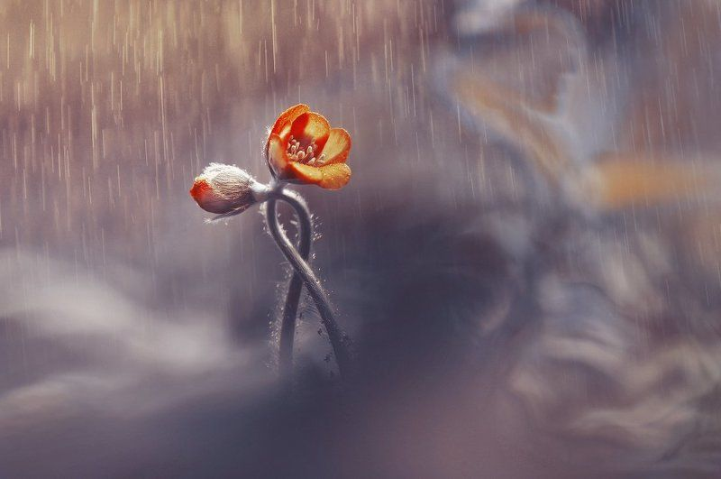 Двое под дождем и др. или серия в золотых тонахphoto preview