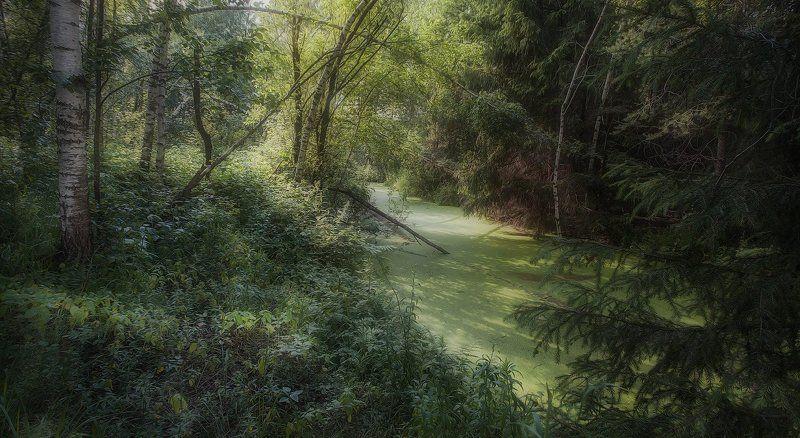 Купавна, лес, июнь, жара. В жарком лесуphoto preview