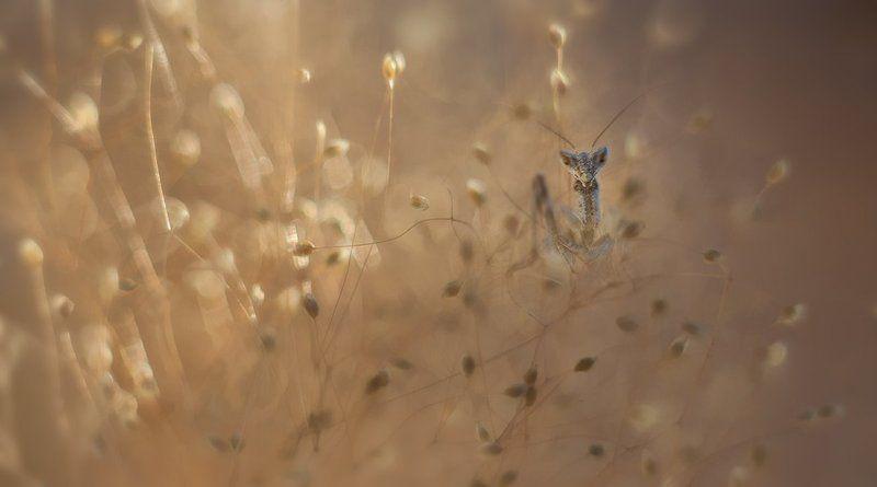 Золотой лучик.photo preview