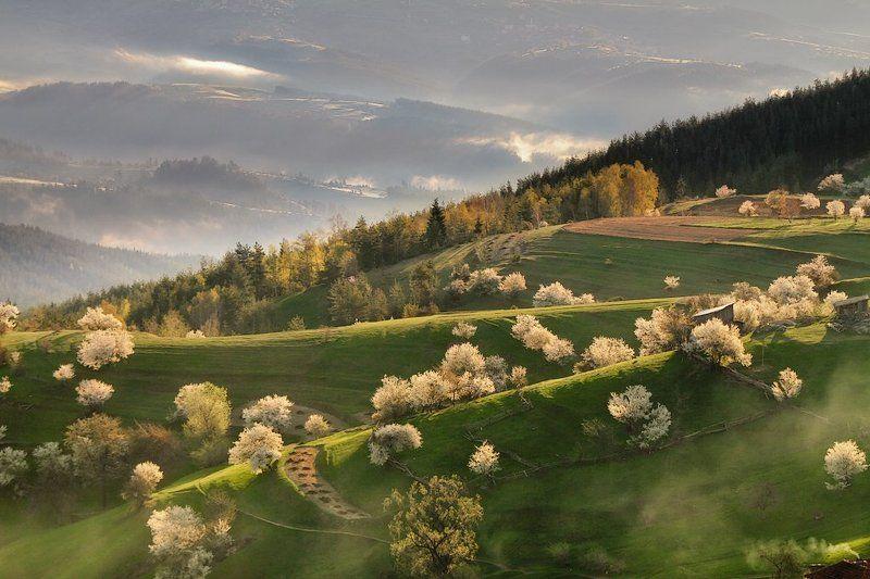 българия, гора, родопы, утро Притча о  утром Родопыphoto preview