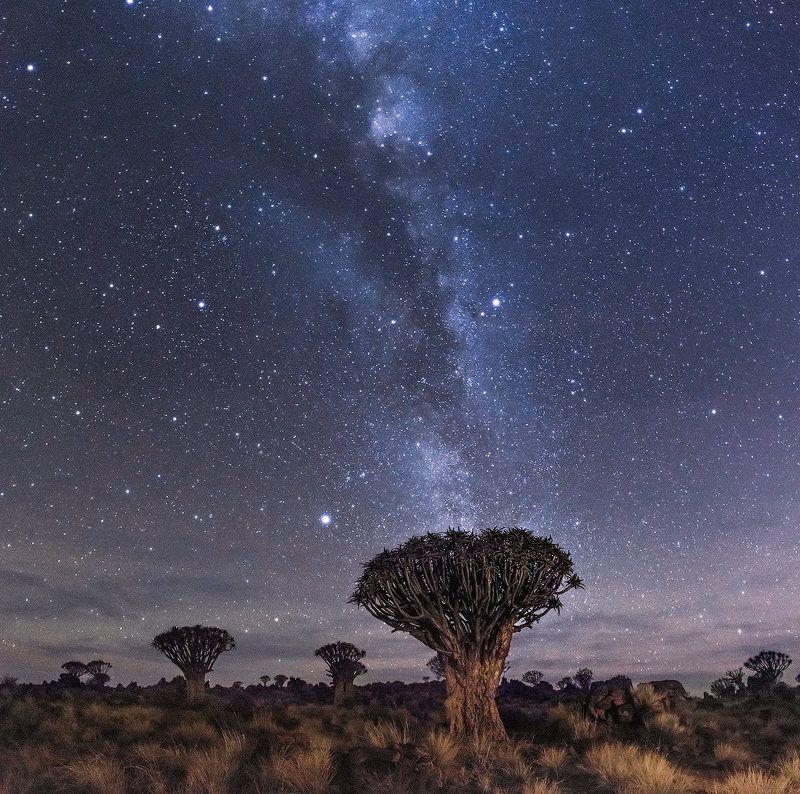 Алоев лес, Млечный путь, Намибия Звездное небо Намибииphoto preview