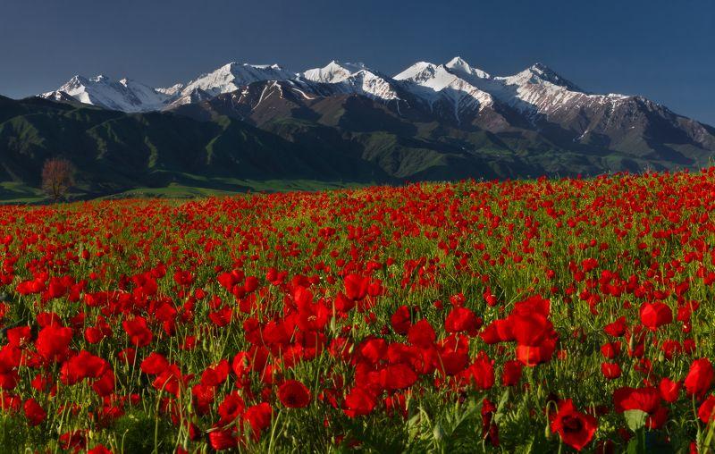 киргизия, бишкек, маки, горы, t_berg Этюд с мокрыми ботинкамиphoto preview