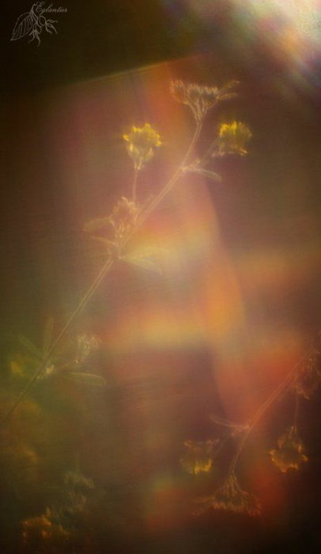 трава, солнце, радуга, монокль, зеркало Картарадугаphoto preview