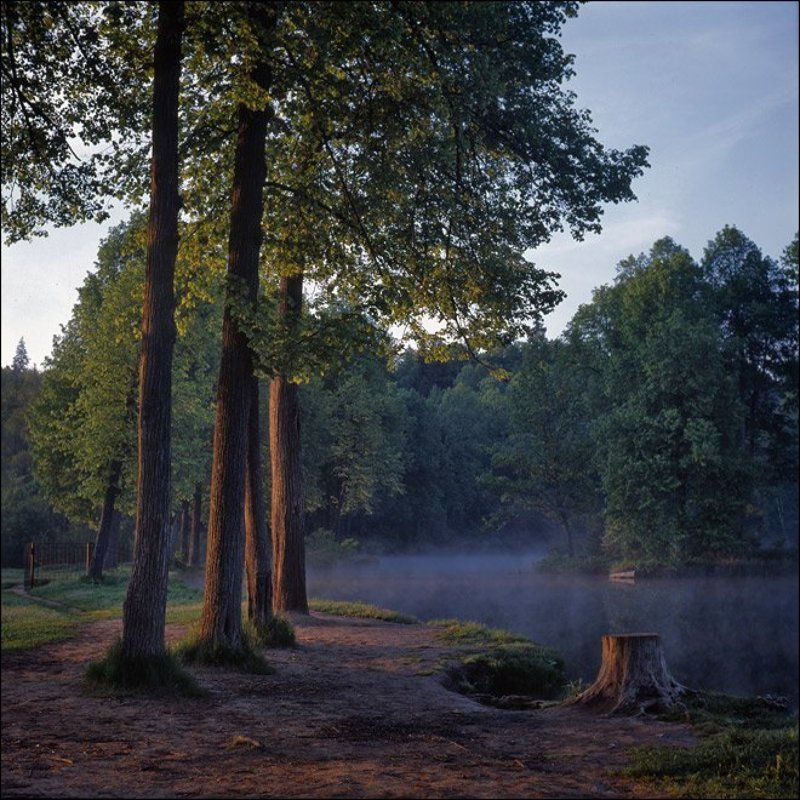 Утренняя слайдовая картинка с видом на пень у середниковского пруда с западаphoto preview