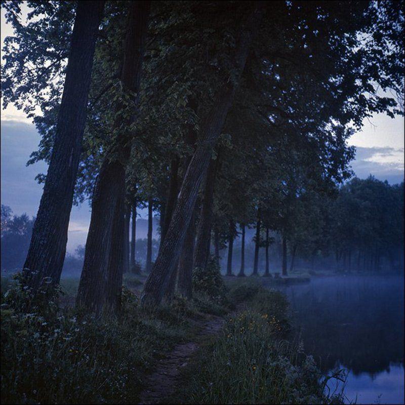 Утренняя летняя слайдовая картинка с деревьями на берегу пруда в Середниковоphoto preview