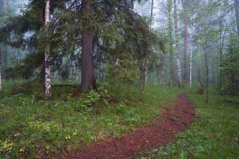 Утро в волшебном лесуphoto preview