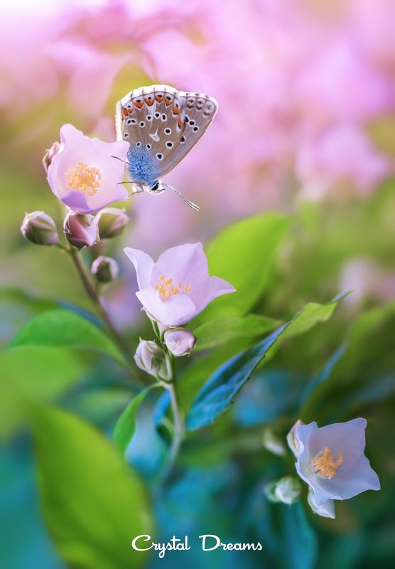 #butterfly #art #beautiful #colo, beauty, butterfly, butterfly art beautiful color cr, color, crystal dreams, flower, garden, macro, nature, spring, summer photo preview