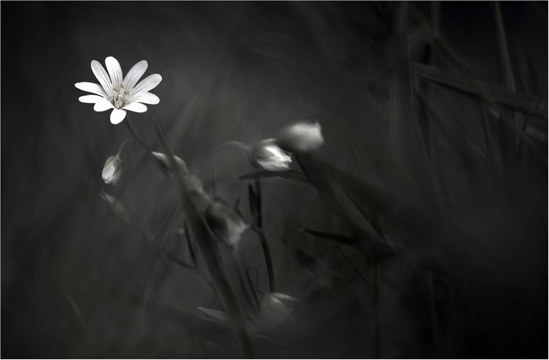Floralphoto preview