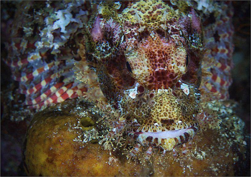 Рыба, Скорпена, Филиппины про скорпенуphoto preview