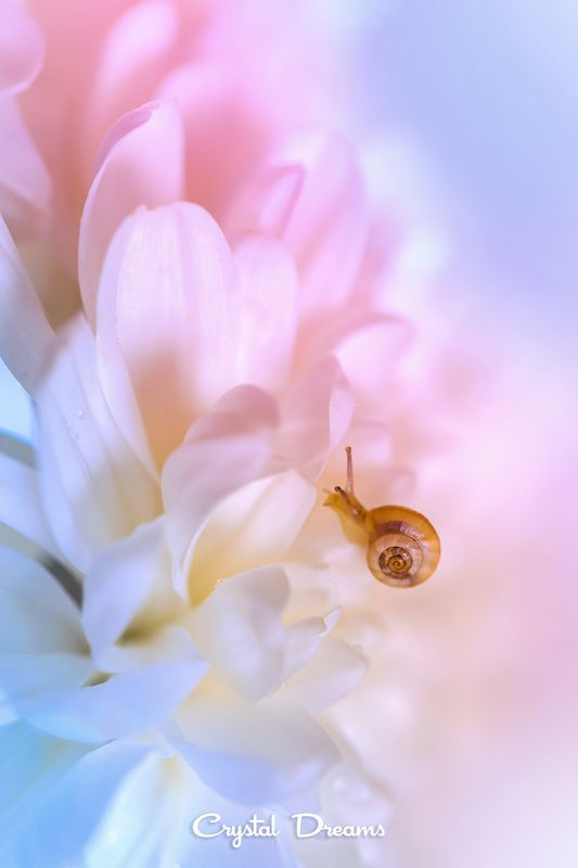 Art, Color, Crystal Dreams, Flowers, Macro, Nature, Snail, Soft \