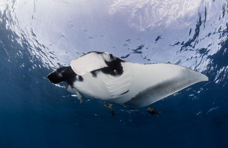Морская птичка.photo preview