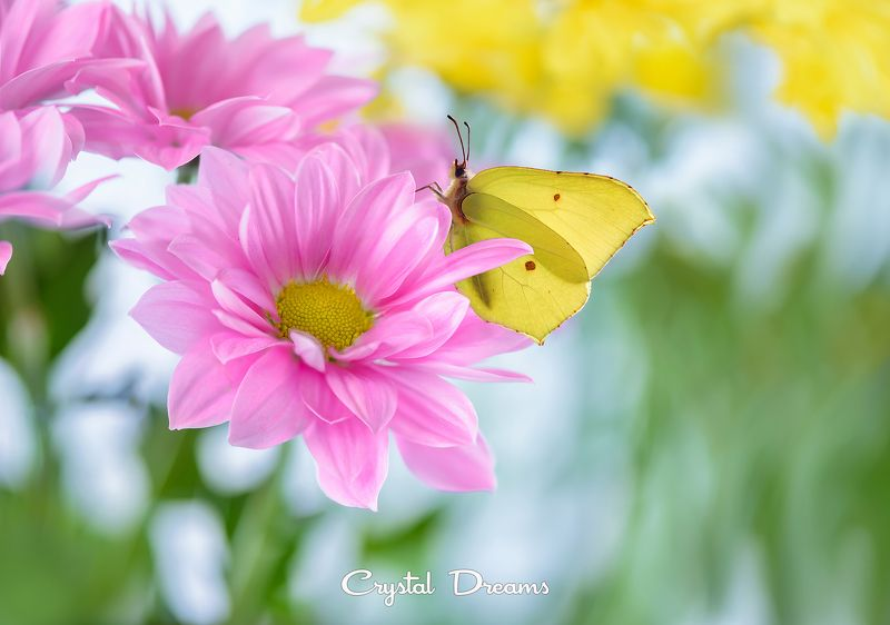 Art, Butterfly, Color, Crystal Dreams, Flower, Macro, Nature \
