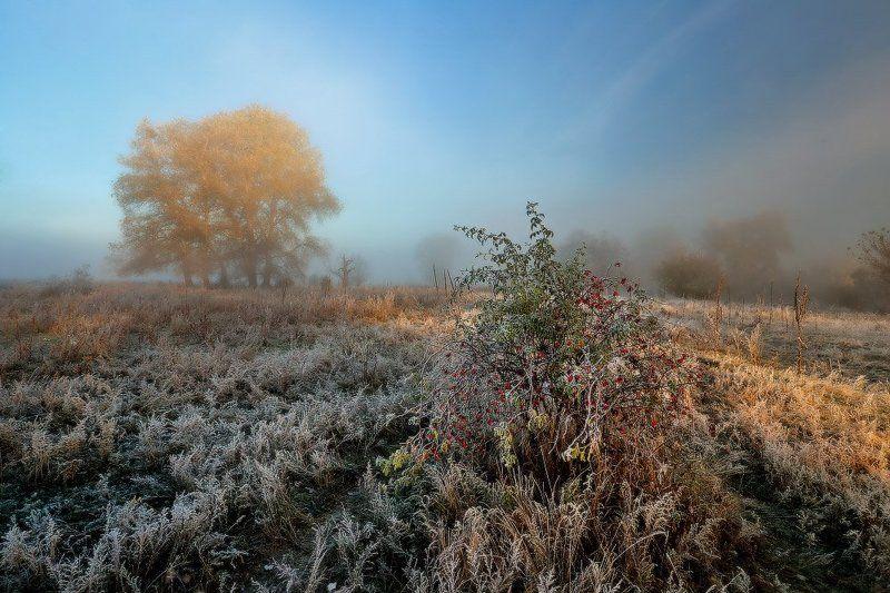 Холодный иней укрывает утро.photo preview
