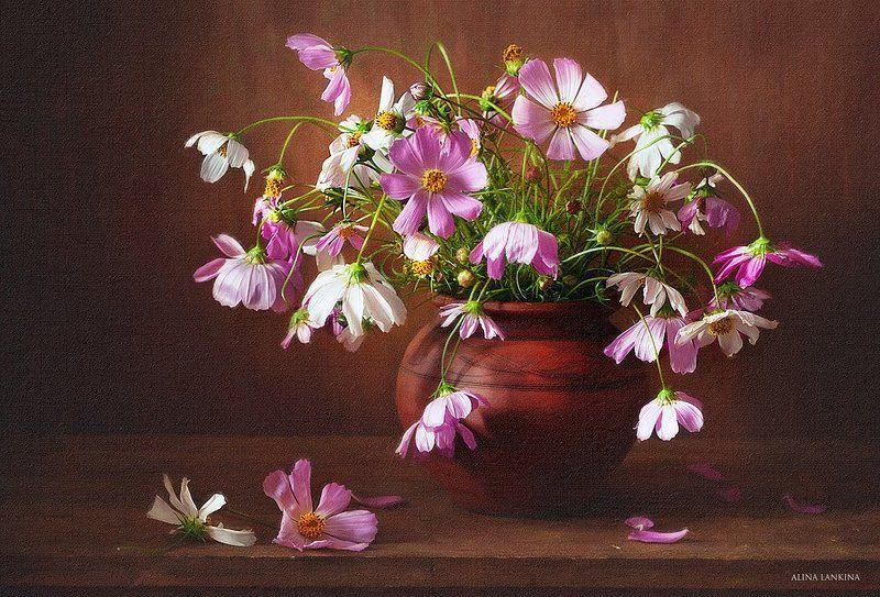 натюрморт, фотонатюрморт, космея, цветы, букет, горшок, лето, алина ланкина Горшочек летаphoto preview