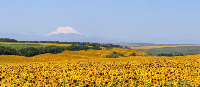 эльбрус, кавказ, sunflower подсолнечная странаphoto preview