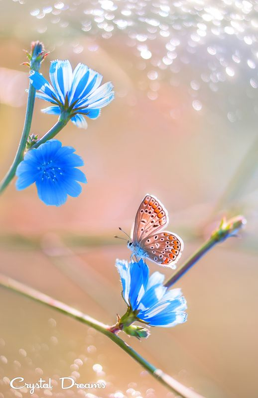Art, Butterfly, Color, Crystal Dreams, Flowers, Light, Macro, Magic, Meadow, Morning, Nature \