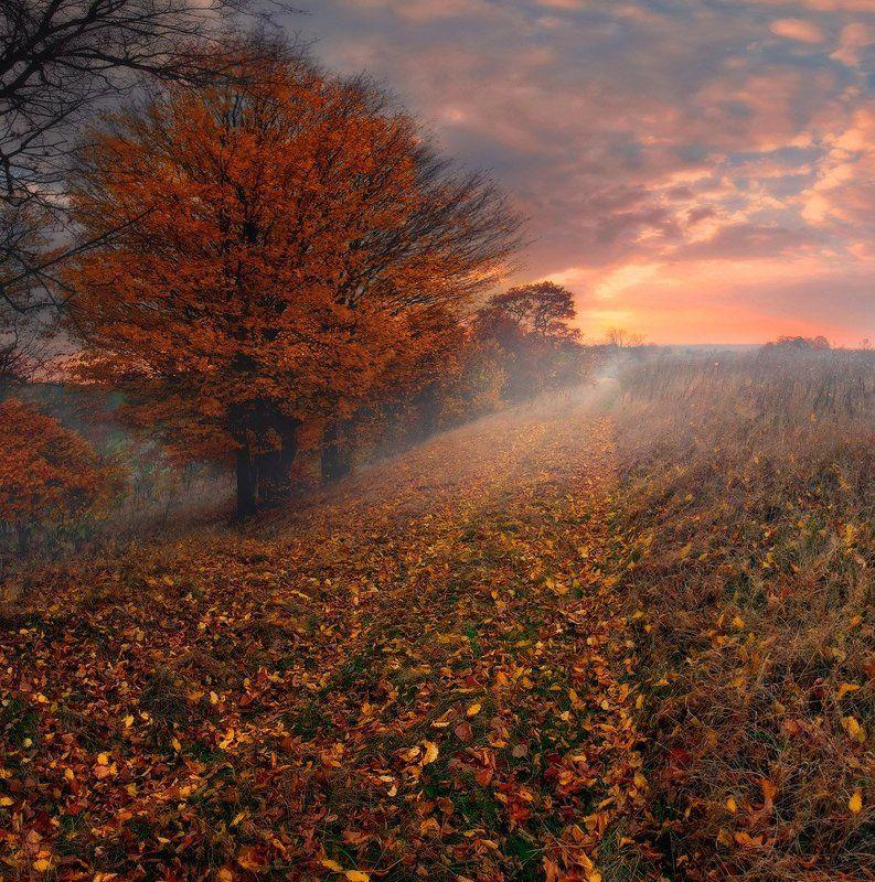 Дорога, Листопад, Осень, Рассвет, Утро Осень как предчувствиеphoto preview