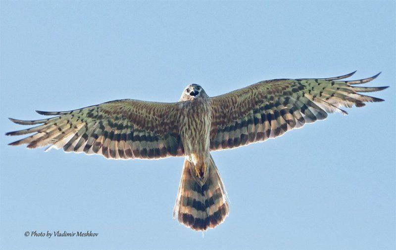 Крик свободной птицыphoto preview