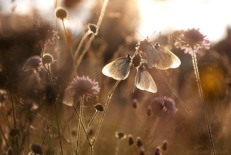 Пеперуди в треватаphoto preview