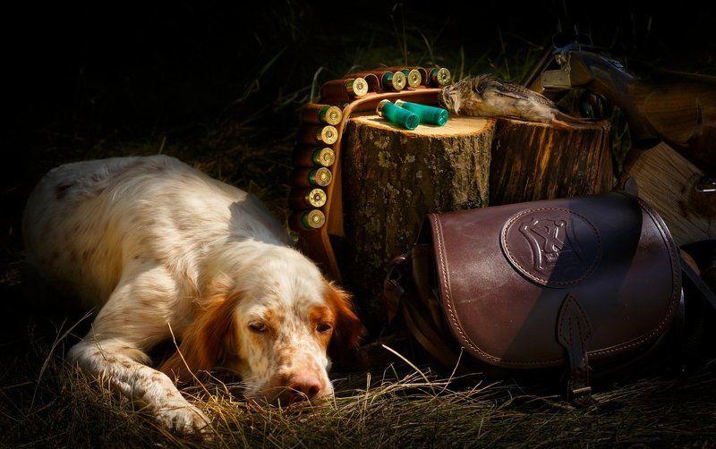 английский, добыча, охота, патронташ, перепел, ружье, сеттер, собака, фотонатюрморт, ягдташ, легавая собака Охотничий этюд.photo preview