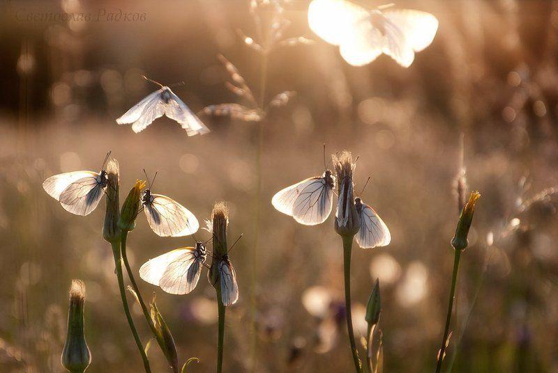 Танцуващите Пеперудиphoto preview