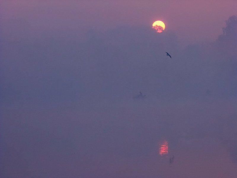 Вода, Восход солнца, Озеро, Пейзаж, Птицы, Туман, Утро В стране слепых тумановphoto preview